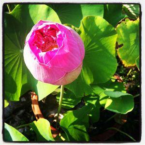 ER-flower
