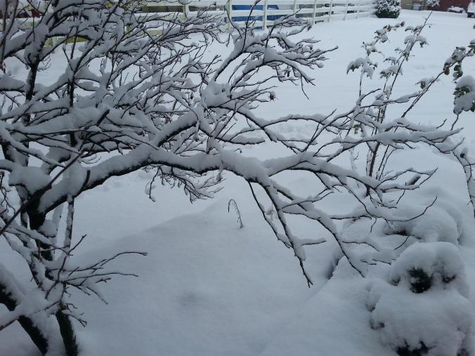 snow holy