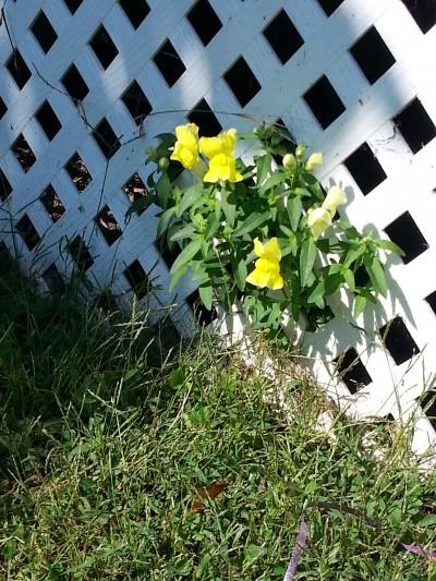 flower surprise closeup